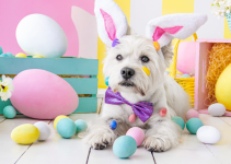Easter dog, bunny ears, Easter eggs, pastel eggs, Easter pet dangers, Easter pet hazards, Easter pet toxins, Easter pet safety, pet owners, pet parents, holiday pet dangers, pet emergency, Animal Emergency & Referral Center of Minnesota, St. Paul emergency vet, Oakdale emergency vet, emergency veterinarian, Twin Cities emergency vet, Minnesota emergency vet