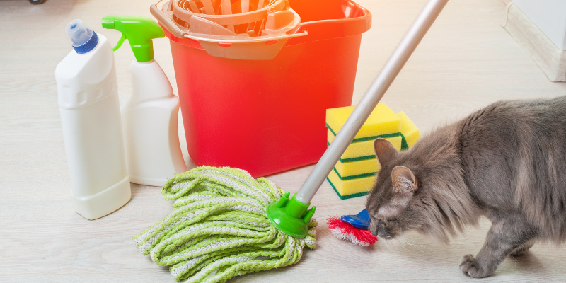 cat, mop, cleaning, household pet toxins, household pet dangers, household pet hazards, common pet toxins, common pet hazards, Animal Emergency & Referral Center of Minnesota, Twin Cities emergency vet, Saint Paul emergency vet, Oakdale emergency vet, Minnesota emergency vet, pet owners, pet parents