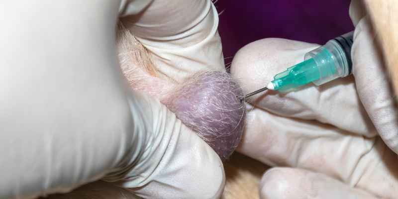 lump, mass, fine needle aspirate, detect cancer early, detect pet cancer early, pet health, pets, cancer in pets, pet cancer, veterinary oncology, pet oncology, Animal Emergency & Referral Center of Minnesota, AERC Oncology