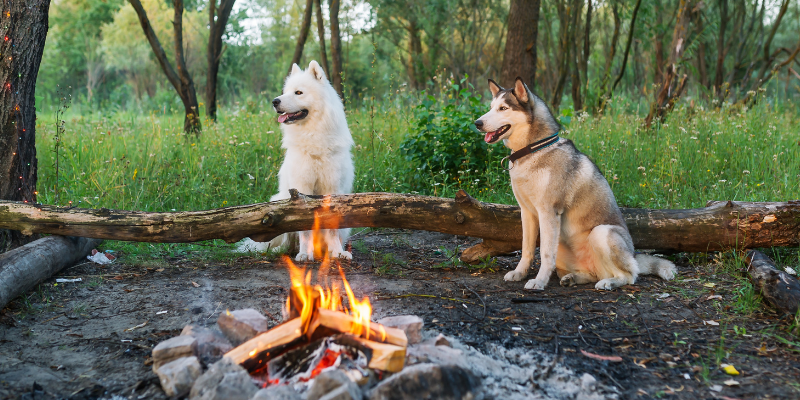 dogs, bonfire, camping, summer pet safety, pet health, pet safety, summer pet safety tips, summer pets, summer pet dangers, summer pet hazards, Animal Emergency & Referral Center of Minnesota, Twin Cities veterinary, Twin Cities emergency animal hospital, Saint Paul emergency animal hospital, Oakdale emergency animal hospital