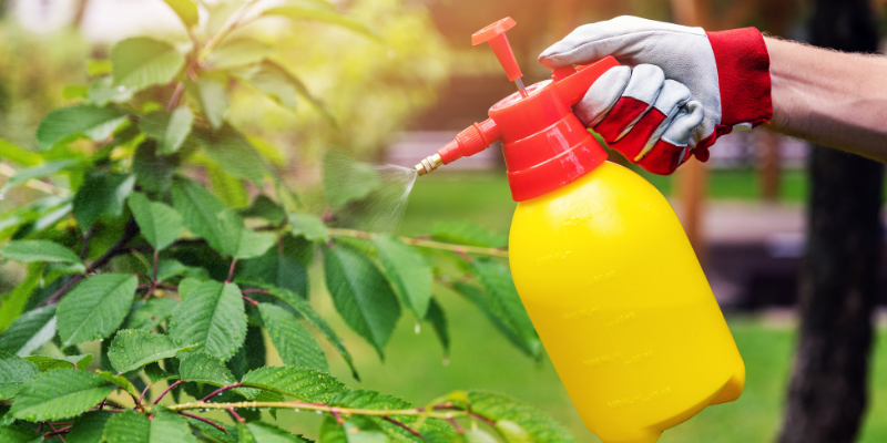 chemical sprays, gardening safety for pet owners, gardening toxins for pets, pet toxins, pet toxins in the garden, pet hazards in the garden, garden safety for pets, Animal Emergency & Referral Center of Minnesota, Twin Cities emergency vet, Oakdale emergency vet, St. Paul emergency vet, spring pet toxins, spring pet hazards