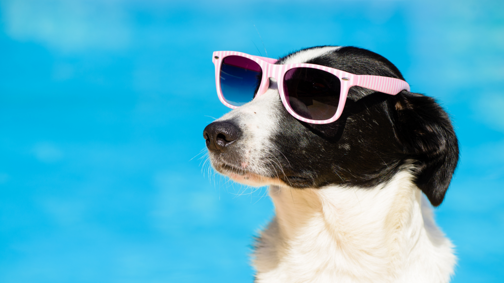 summer pet safety, pet health, pet safety, summer pet safety tips, summer pets, summer pet dangers, summer pet hazards, Animal Emergency & Referral Center of Minnesota, Twin Cities veterinary, Twin Cities emergency animal hospital, Saint Paul emergency animal hospital, Oakdale emergency animal hospital