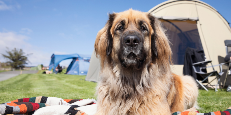 dog, camping, outdoors, outside, insect repellent toxicity, DEET, citronella, preventatives, pet dangers, pet toxins, pet health, summer pet toxins, Animal Emergency & Referral Center of Minnesota, Twin Cities emergency vet, Twin Cities ER vet