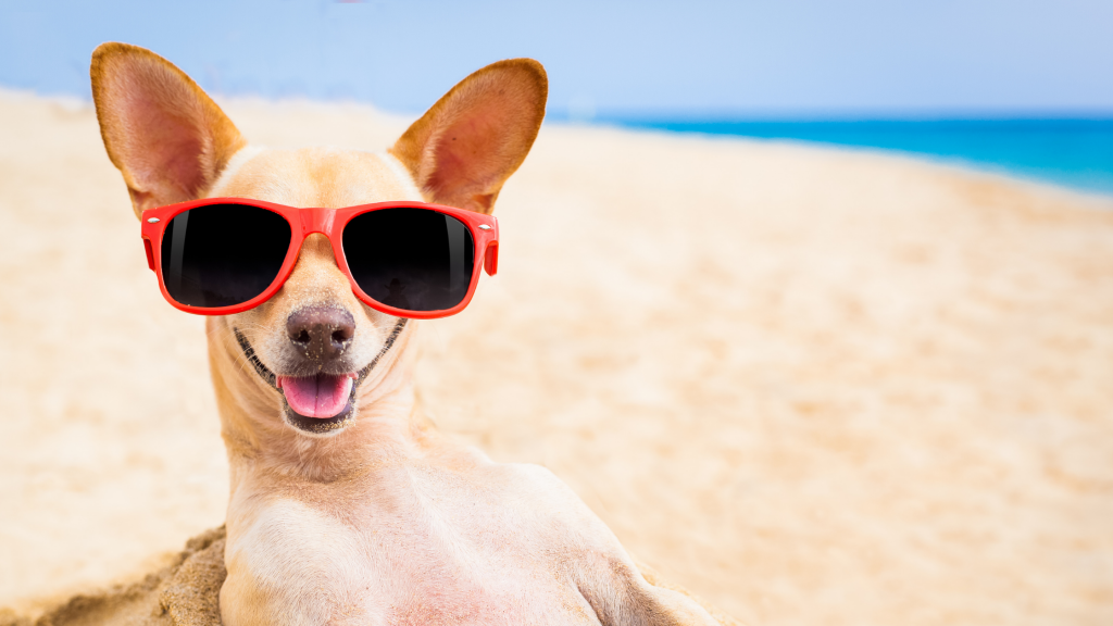 dog, sunglasses, beach, Sand Impaction, Sand Impaction in dogs, dog health, dogs at the beach, beach dangers for pets, beach dangers for dogs, summer pet dangers, Animal Emergency & Referral Center of Minnesota, Twin Cities emergency veterinarian, Saint Paul emergency veterinarian, Oakdale emergency veterinarian