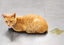 cat, urine, cat accident, urinary crystals, cat health, pet health, Animal Emergency & Referral Center of Minnesota, Twin Cities emergency vet, Saint Paul emergency vet, Oakdale emergency vet