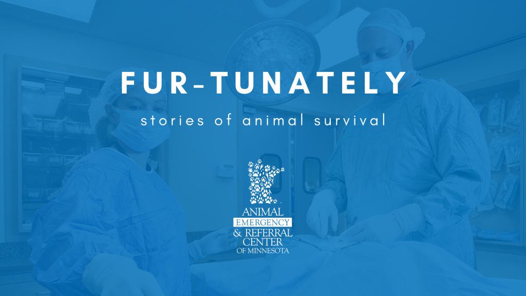 Fur-Tunately, Stories of Animal Survival, Animal Emergency & Referral Center of Minnesota, Twin Cities emergency vet, Saint Paul emergency vet, Oakdale emergency vet, Minnesota emergency vet, emergency veterinary care